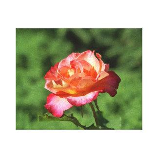 Orange and Pink Hybrid Tea Rose in Garden 8x10 Canvas Print