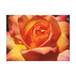Orange and Pink Rose Canvas Prints