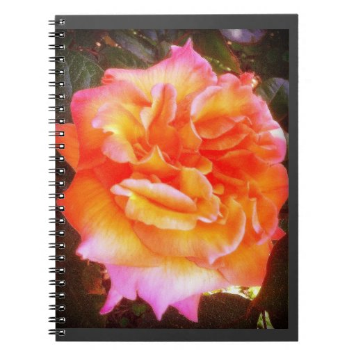 Orange and Pink Rose Note Book