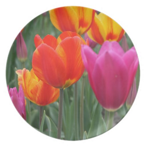 Orange and Pink Tulips Plates