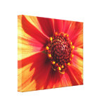 Orange and Red Dahlia Canvas Print
