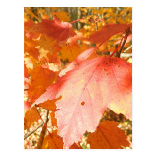Orange and Red Fall Leaves Postcard