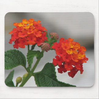 Orange and Red Lantana Mouse Pad