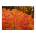 Orange and Red Maple Leaf Abstract Autumn Nature Card