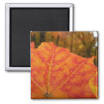 Orange and Red Maple Leaf Abstract Autumn Nature Magnet