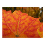 Orange and Red Maple Leaf Abstract Autumn Nature Postcard