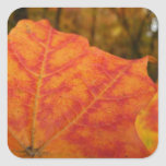 Orange and Red Maple Leaf Abstract Autumn Nature Square Sticker