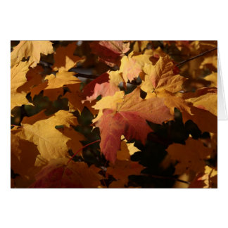 Orange and red Maple leaves in sunlight Card