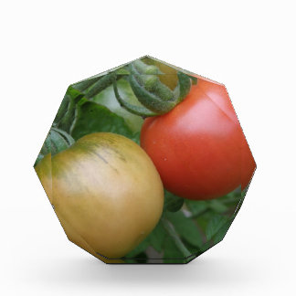 Orange and Red Tomatoes Decorative Acrylic Award