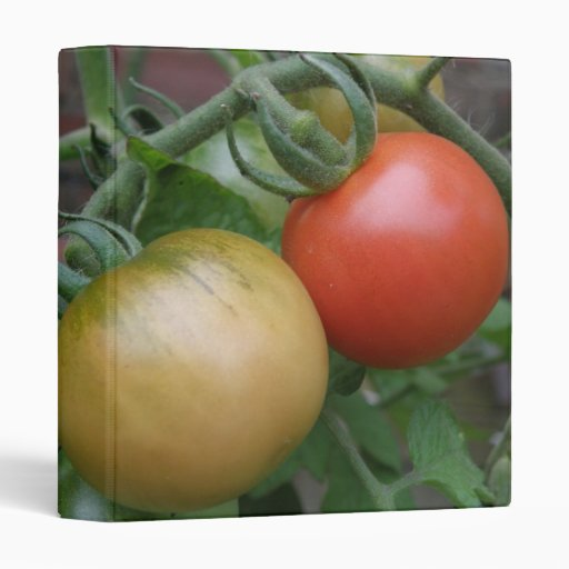Orange and Red Tomatoes Photograph Album 3 Ring Binders
