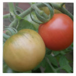 Orange and Red Tomatoes Tile