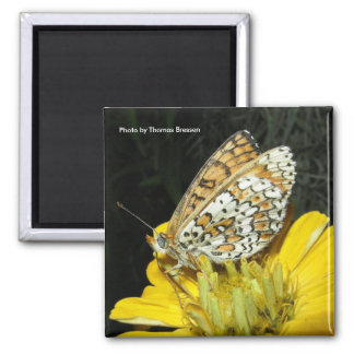 Orange and White Butterfly Magnet