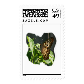 Orange and White Butterfly Photograph Postage