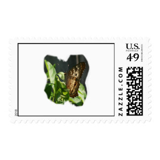Orange and White Butterfly Photograph Stamps