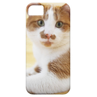 orange and white cat looking at camera iPhone 5 cases