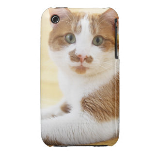 orange and white cat looking at camera iPhone 3 cases