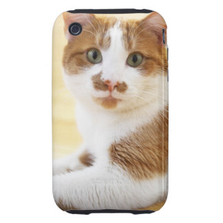 orange and white cat looking at camera tough iPhone 3 cases