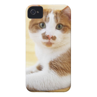 orange and white cat looking at camera Case-Mate iPhone 4 cases