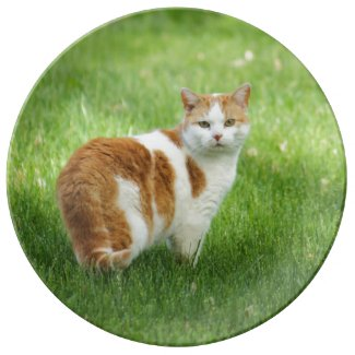 Orange and White Cat Porcelain Plates