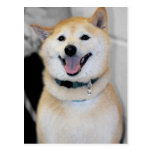 Orange and White Shiba Inu Dog Breed Postcards