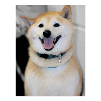 Orange and White Shiba Inu Dog Breed Postcards