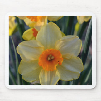 Orange and Yellow Daffodils Mouse Pad