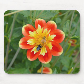 Orange and yellow dahlia flower mousepad