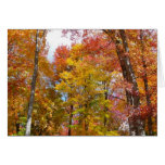 Orange and Yellow Fall Trees Autumn Photography Card