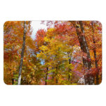 Orange and Yellow Fall Trees Autumn Photography Magnet
