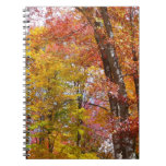 Orange and Yellow Fall Trees Autumn Photography Notebook
