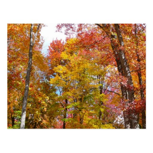 Orange and Yellow Fall Trees Autumn Photography Postcard