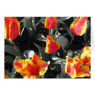 Orange and yellow fire tulips card