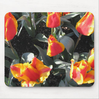 Orange and yellow fire tulips mouse mat