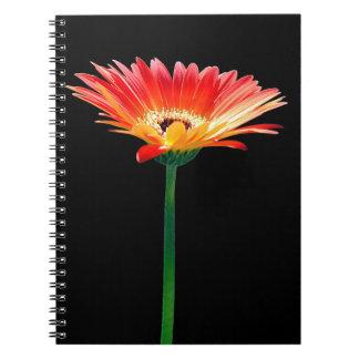 Orange and Yellow Gerbera Daisy Notebooks