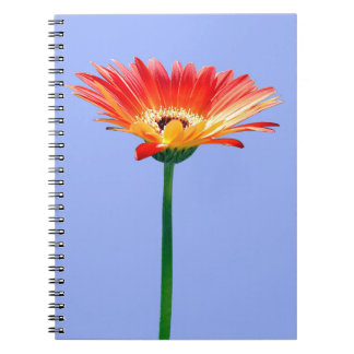 Orange and Yellow Gerbera Daisy Spiral Notebook