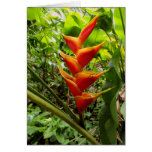 Orange and Yellow Heliconia Greeting Cards