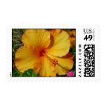 Orange and Yellow Hibiscus Stamp