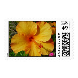 Orange and Yellow Hibiscus Stamps