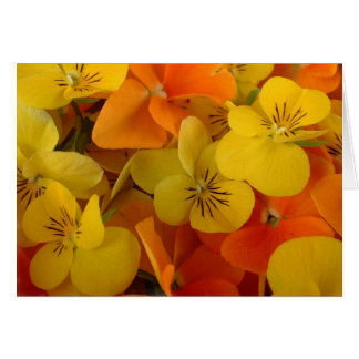 Orange and Yellow Johnny Jump Up Greeting Card
