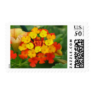 Orange and Yellow Lantana Postage