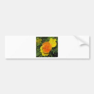 Orange and yellow pansies pansy car bumper sticker