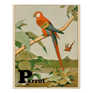 Orange and Yellow Parrot in the Jungle Poster