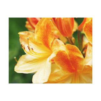 Orange and Yellow Rhododendron Flower Stretched Canvas Print