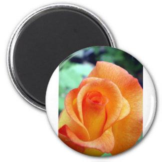 Orange and Yellow Rosebud 2 Inch Round Magnet