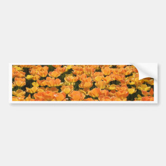 Orange and Yellow Tulips Car Bumper Sticker