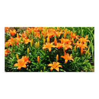 Orange Asian LIllies Card