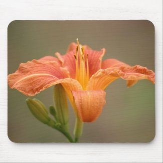 Orange Asian lily Mouse Pad