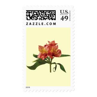 Orange Asiatic Lilies Postage