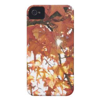 Orange autumn leafs with hard sun iPhone 4 Case-Mate case