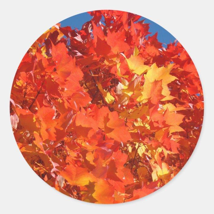 Orange Autumn Leaves stickers Fall Leaves